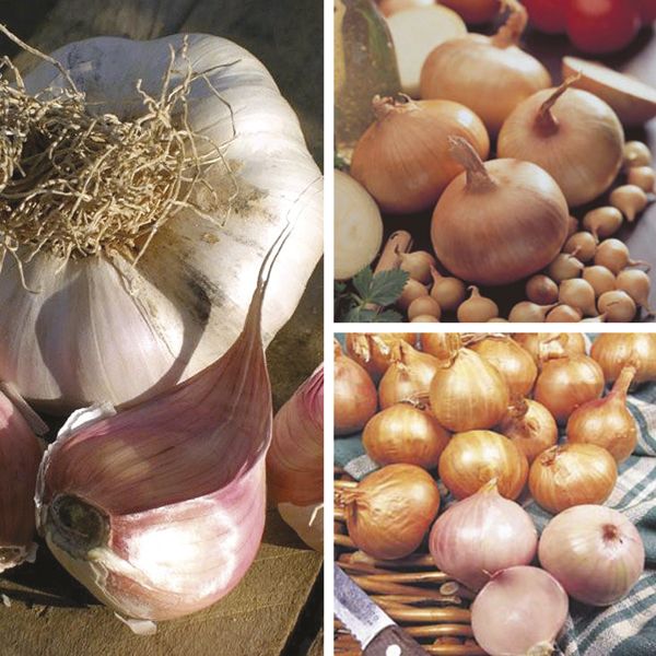 garlic onions and shallots.jpg